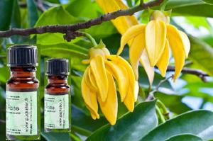 Ylang-ylang oil - properties and applications